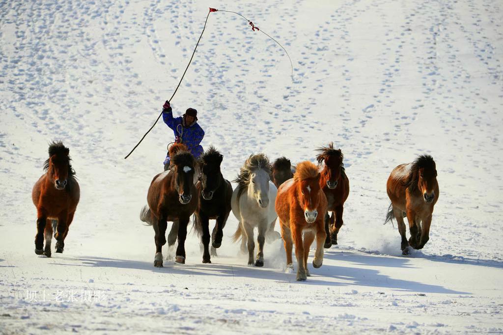 坝上草原冬雪深度摄影创作团