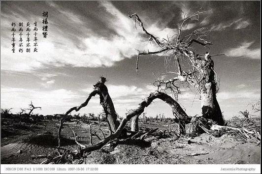内蒙额济纳旗、巴丹吉林沙漠、居延海、张掖九日专业摄影创作行程: