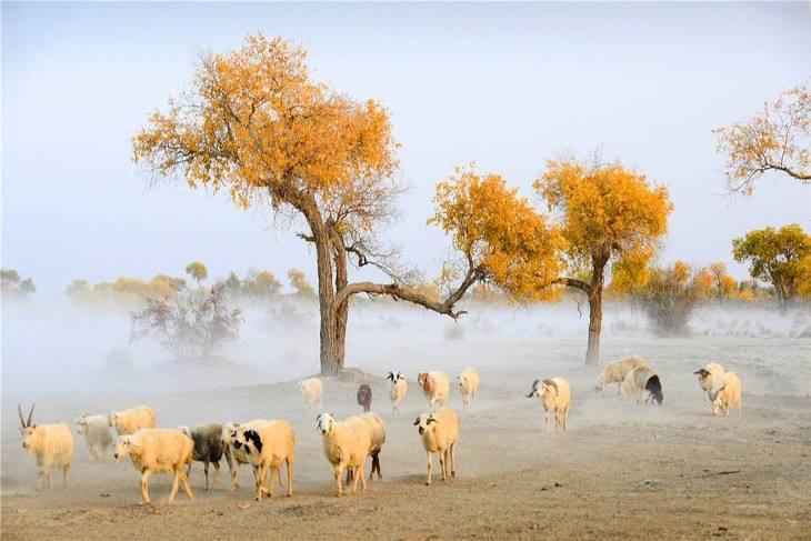 独家环线南疆深度摄影   走帕米尔  罗布人村 和田河体会最古老的玉石文化