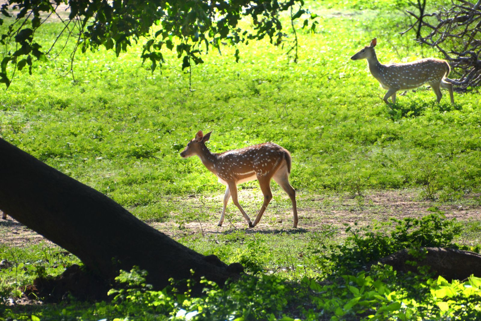 Bundala国家野生动物